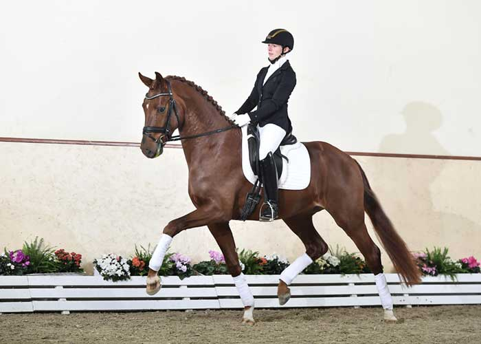 fuerst jazz stallion
