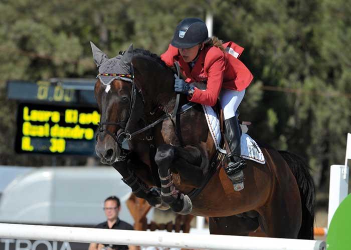 Qualdandro stallion