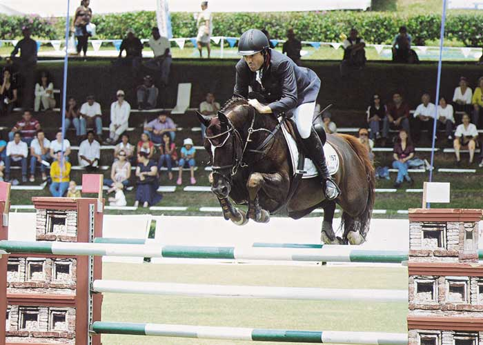 Quicksilber warmblood stallion